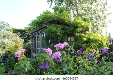 English cottage garden with rambling roses & a summer house