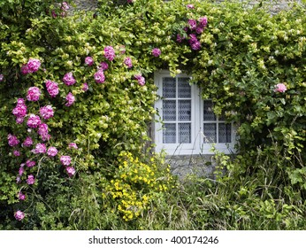 English Country Cottage Window; window surrounded by climbing roses and honeysuckle