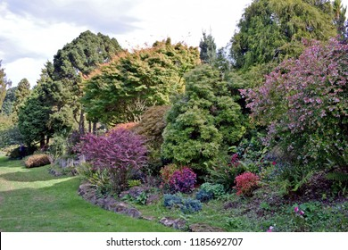 English Country garden with  very colourful  bushes ,shrubs and flowers .
