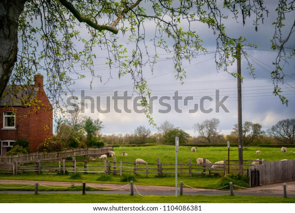 English farmhouse and sheeps on the field