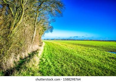 English field bordering on woodland Amphill Bedordshire. English field bordering on woodland with vivid blue sky