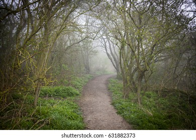 English footpath. Narrow walkway through misty forest. Journey into unknown.