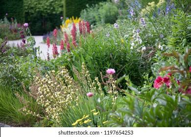 English Garden Border in Summer