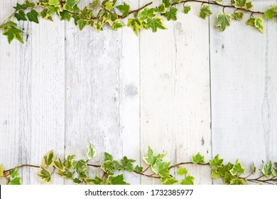 English ivy on white painted wooden board, background image