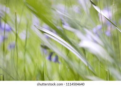 English Meadow Background in Spring