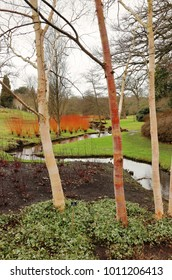 An English Park in Winter with meandering stream