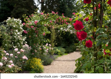 English Rose Garden in Summer