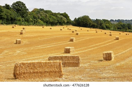 English Rural Landscape in the Chiltern Hills with Bales of hay