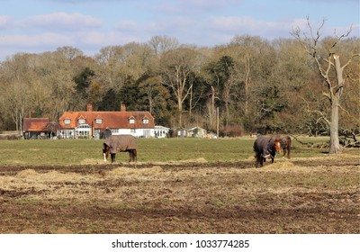 English Rural Landscape in Winter with Horses grazing on hay in a field