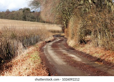 An English Rural Lane in the Chiltern Hills in England in Winter sunshine