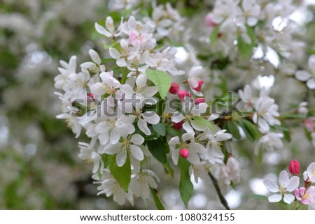 English Spring Flowers Stock Photo Edit Now 1080324155 Shutterstock