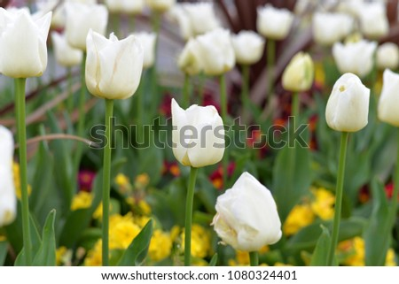 English Spring Flowers Stock Photo Edit Now 1080324401 Shutterstock
