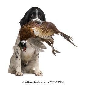 Bird Dogs Images, Stock Photos & Vectors | Shutterstock