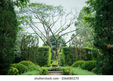 English style garden and big tree in the middle with pathway to walk.
