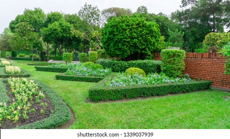 English topiary garden, landscape of geometric shape bush and shrub decorate with colorful flower blooming in green leaf Philippine tea plant border, greenery trees and orange brick wall on background