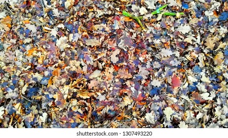English Woodland Floor in Wintertime.