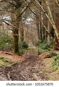 English Woodland scene in the Chiltern Hills with muddy track leading to a fence