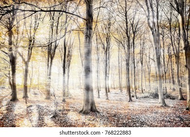 English woodland with thick whispers wafting through the dense tree forest. Haunting colours in a surreal natural winter landscape