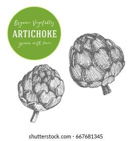 Engraving Artichoke illustration. Hand drawn with ink vintage illustration. Vegetable design element.