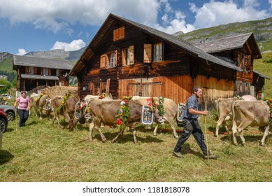 Engstlenalp, Switzerland - 4 August 2018: cow decorated with flowers and flags on the annual transhumance at Engstlenalp on the Swiss alps