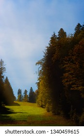 Enigmatic sunbeam over a green meadow and fir trees in autumn.