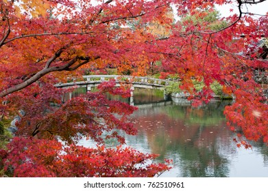 Enjoy beautiful autumn leaves (maple leaves/Momiji) at Eikando Temple and Zenrinji shrine garden, which is one of the most famous places in Kyoto City, Japan on mid-November 2017