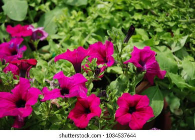 enjoy the beauty flowers in your home yard