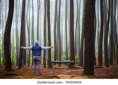 enjoy the fog in the pine forest