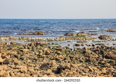 Enjoy the seaside