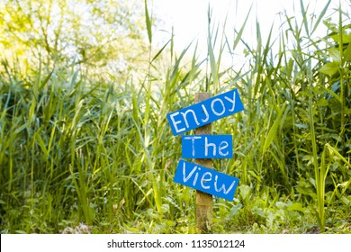 """Enjoy the view"" wooden blue Sigh surrounded by lush vegetation at nature reserve in UK, Europe"