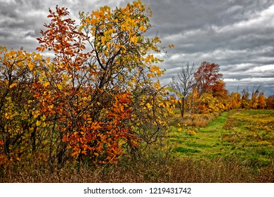 Enjoying the Autumn colors in an overgrown farm field near Collingwood, Ontario.