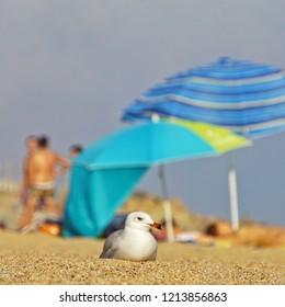 Enjoying the beach and life