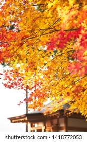 Enkoji temple (Enkou-ji) in autumn, Kyoto, Japan.