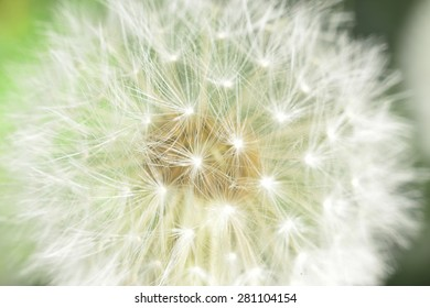 enlarged Dandelion ( blowball ) with fluff and seeds over green
