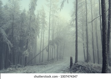 Enlarged forest in the fog. Fallen trees after a windy storm. Czech Republic, Beskydy Mountains.