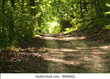 Enlightening, path through a deep forest with a distant sunny patch of light, focus on the foreground