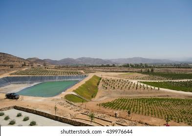 ENSENADA, BAJA CALIFORNIA, MEXICO- MARCH 21, 2015: View of a vineyard at Valle de Guadalupe. Ensenada, Baja California, Mexico