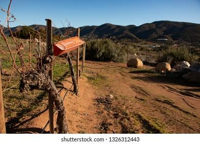 Ensenada, Baja California Norte, Mexico, January 3th, 2019, Pheromone trap for pest monitoring in vineyards