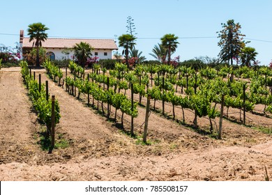 ENSENADA, MEXICO - MAY 3, 2017:  Building in vineyard at the Adobe Guadalupe Winery and Inn in Baja California's Valle de Guadalupe, near the town of El Porvenir.
