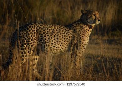 Entabeni Reserve, South Africa