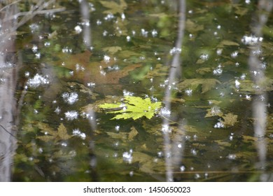 The entire region draining into a river, river system, or other body of water: a list of reptiles found in the watershed. Also called basin, drainage basin.