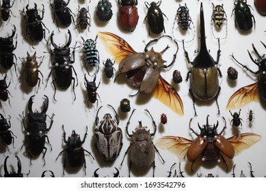 Entomology Insect Frame, Beetle Collection Taxidermy