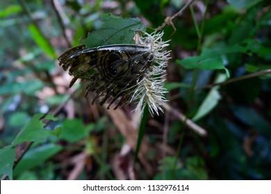 Entomopathogenic, Insect Fungi