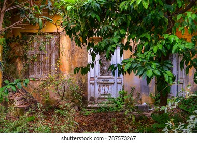 The entrance of an abandoned house .The courtyard with  overgrown vegetation in foreground and broken door and windows in background.
