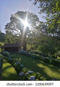 Entrance of country house in the background the rays of the sun at dawn that intertwine among the trees to give a light and beauty among the hortencias and flowers of the entrance of the home