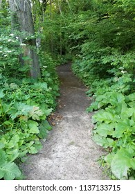 Entrance to a dirt footpath leading deep into a wooded area in the upper Midwest USA.