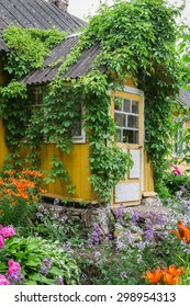 Entrance to the old rustic yellow house decorated parthenocissus and garden flowers. Russia