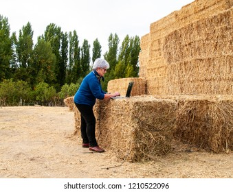 An entrepreneur senior woman working outdoor on a farm with a laptop over a hay bale