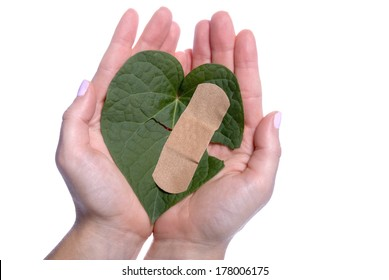 Environment concept with a girls hands holding a broken heart shaped leaf with a bandaid.