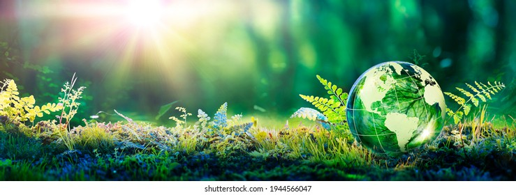 Environment Concept - Globe Glass In Green Forest With Sunlight